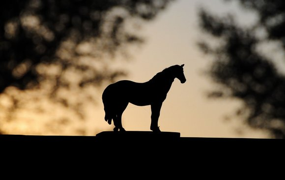Rsz dark horse1623643 1280