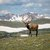 Medium nature elk wildlife adventure mountains 4460x4460